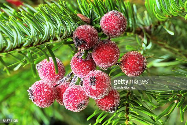 Christmas Berry Decorations