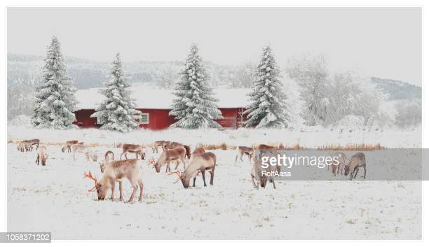 christmas card - reindeer stock pictures, royalty-free photos & images