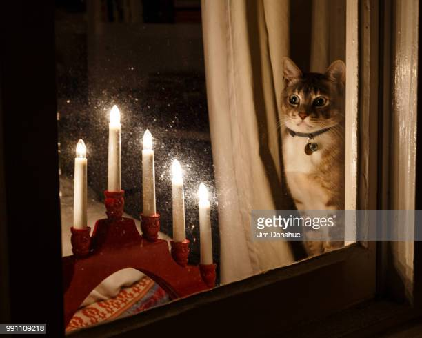 christmas cat, henley on thames - jim donahue stock pictures, royalty-free photos & images