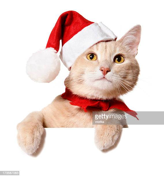 christmas cat (blank sign) - santa hat stock pictures, royalty-free photos & images