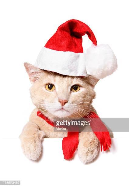 Christmas Cat (blank sign)