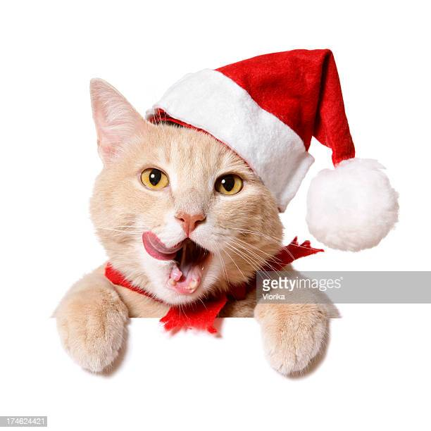 Christmas Cat (blank sign)