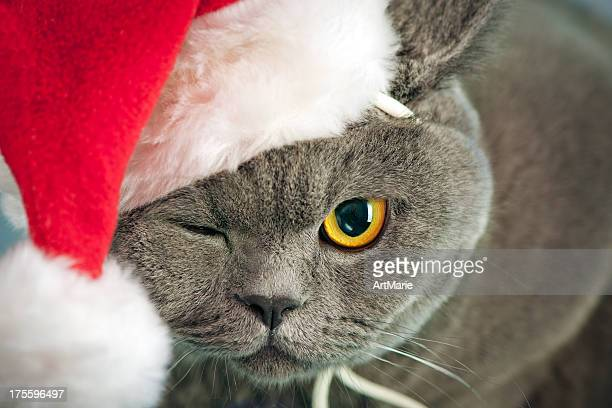 christmas cat - santa face stock pictures, royalty-free photos & images