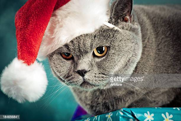 christmas cat - christmas kittens stock pictures, royalty-free photos & images