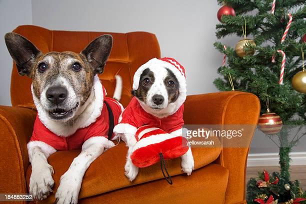 Christmas Comfort Dogs
