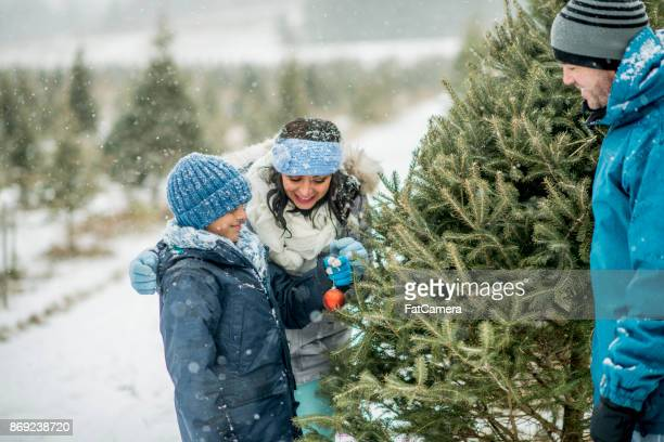 christmas decoration - christmas tree farm stock pictures, royalty-free photos & images