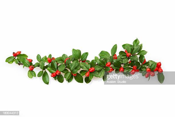 christmas decoration with red berries - twijg stockfoto's en -beelden