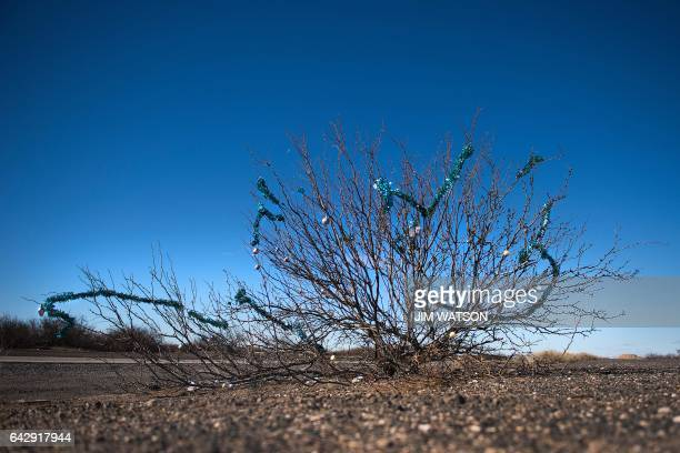 Christmas decorations hangs from a bush in the desert outside Columbus New Mexico on February 19 near the US/Mexico border Attention Editors this...