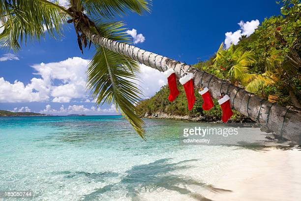 Christmas decorations on a palm tree at the Caribbean beach