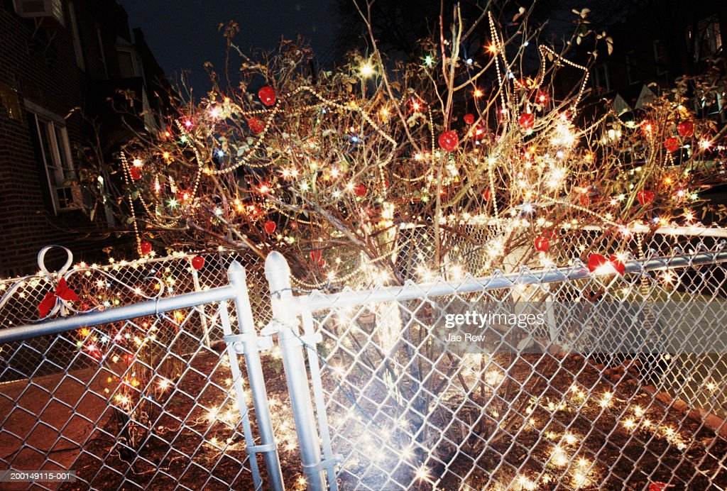 Christmas Decorations On Tree And Fence In Yard At Night Stock Foto