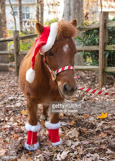 christmas decorations - christmas horse stock pictures, royalty-free photos & images