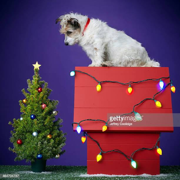 christmas dog 2012 - americas next top dog stock pictures, royalty-free photos & images
