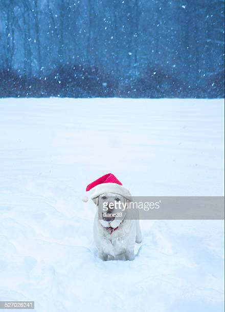 Christmas Dog in the Snow