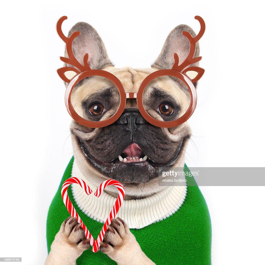 Christmas dog : Foto de stock