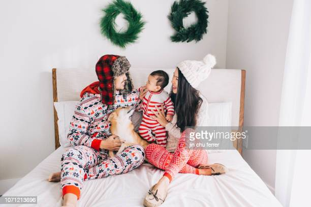 christmas family of four - shiba inu winter stock pictures, royalty-free photos & images