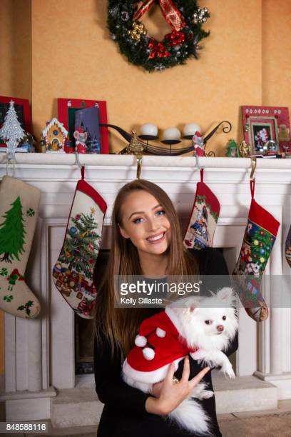 christmas for pets - long haired chihuahua stock photos and pictures