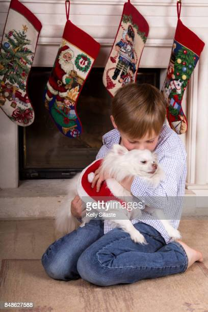christmas for pets - stockings no shoes stock photos and pictures