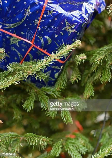 Christmas gift in christmas tree