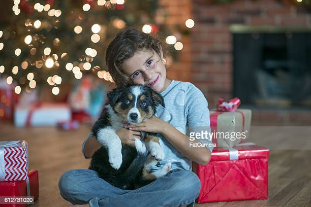 christmas gift - dog eats out girl stock pictures, royalty-free photos & images