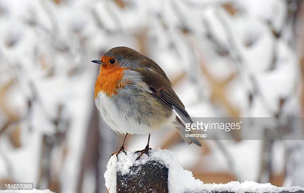 Christmas Holiday Bird
