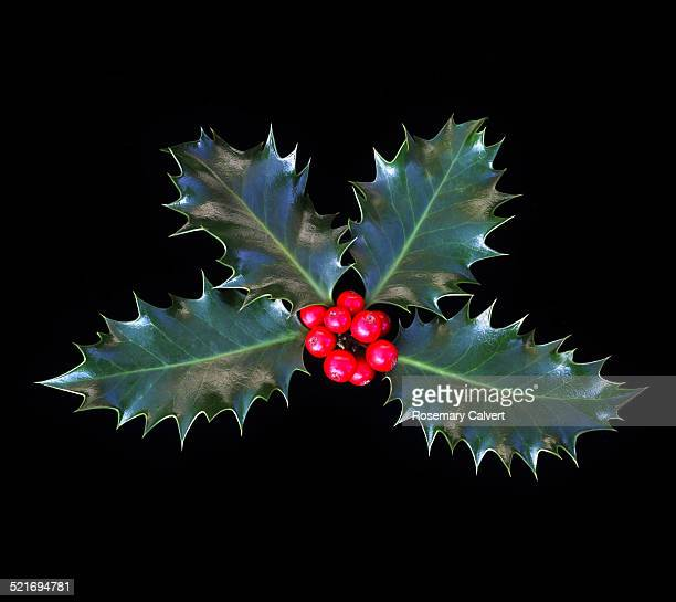 Christmas holly & bright red berries on black.