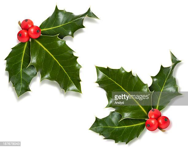 christmas holly corner with clipping path - twijg stockfoto's en -beelden