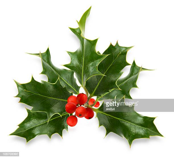 Christmas holly green and red on white background