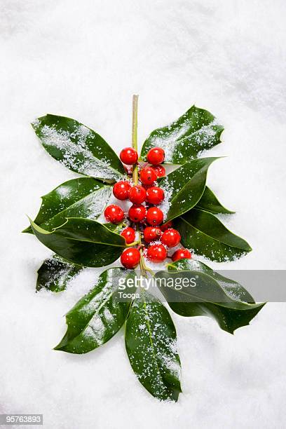 Christmas holly in snow