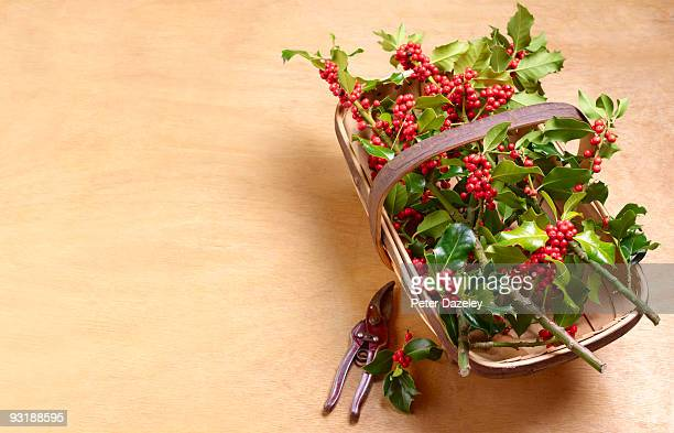 Christmas Holly in trug on wooden background.