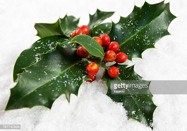 christmas holly - what color are the berries of the mistletoe plant stock pictures, royalty-free photos & images