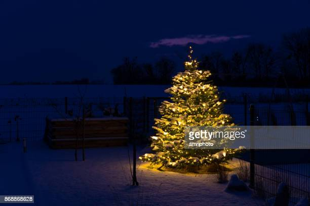 christmas in glr - christmas tree with snow and lights in garden - christmas trees stock pictures, royalty-free photos & images