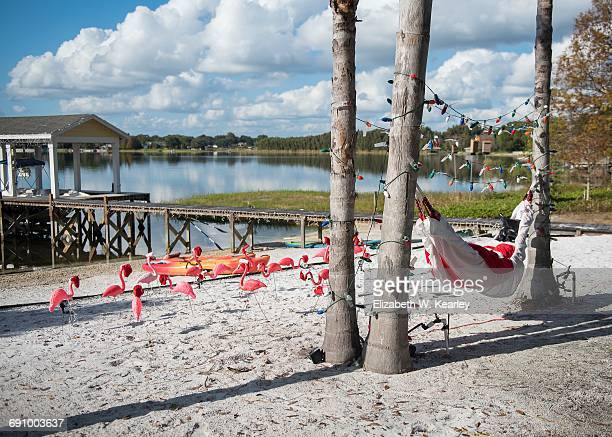 christmas in warm climates - florida christmas stock pictures, royalty-free photos & images