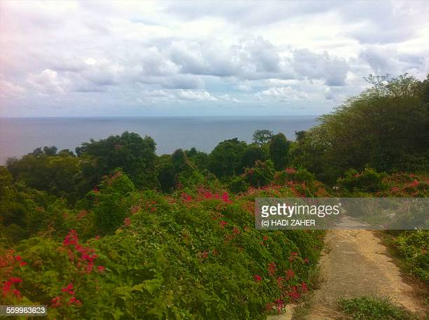 christmas island   indian ocean - western australia stock pictures, royalty-free photos & images