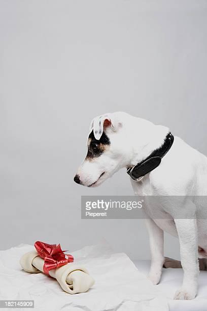 Christmas Jack 0013