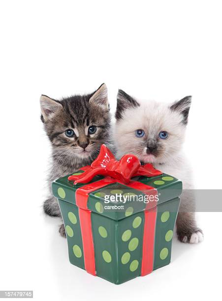 christmas kitten series - christmas kittens stock pictures, royalty-free photos & images