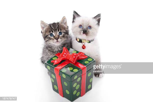 christmas kitten series - dog tag stock photos and pictures