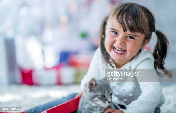 christmas kitty - christmas kittens stock pictures, royalty-free photos & images