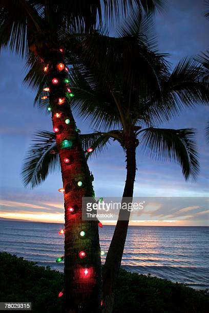 christmas lights adorn a palm tree at sunset on the coast of maui, hawaii. - hawaii christmas stock pictures, royalty-free photos & images