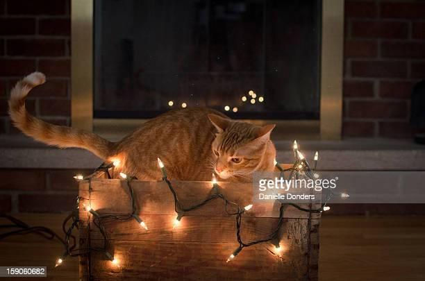 Christmas lights kitty