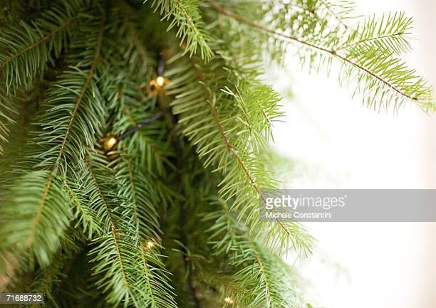Christmas lights on christmas tree, close-up