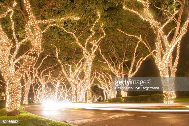 christmas lights on trees at night, wailea, maui, hawaii, usa   - hawaii christmas stock pictures, royalty-free photos & images