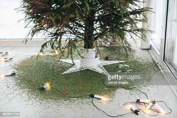 Christmas lights under Christmas tree