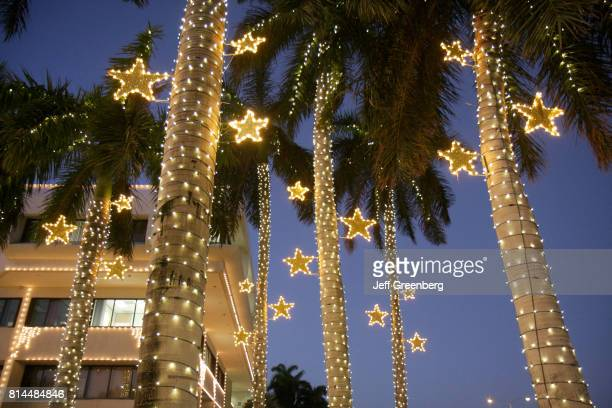 World's Best Christmas Palm Tree Stock Pictures, Photos ...