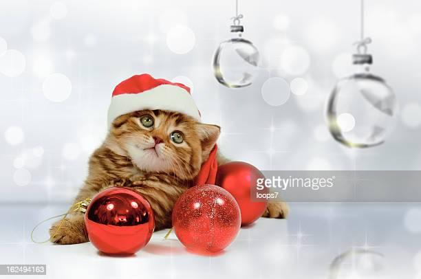 クリスマス小さな猫