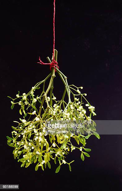 christmas mistletoe on red string. - what color are the berries of the mistletoe plant stock pictures, royalty-free photos & images