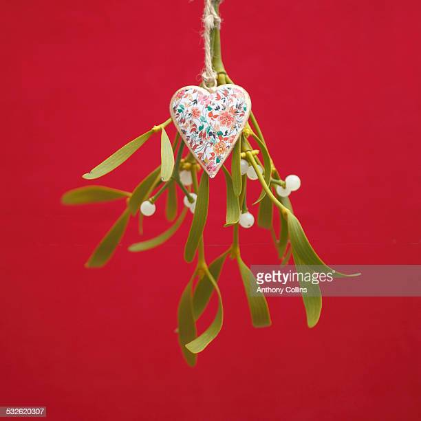 christmas mistletoe - what color are the berries of the mistletoe plant stock pictures, royalty-free photos & images