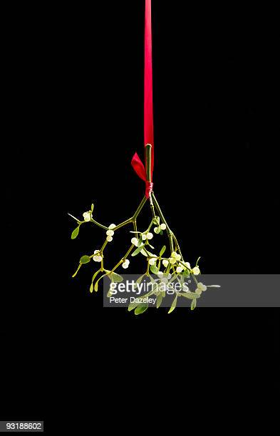 christmas mistletoe tied with red ribbon, - what color are the berries of the mistletoe plant stock pictures, royalty-free photos & images