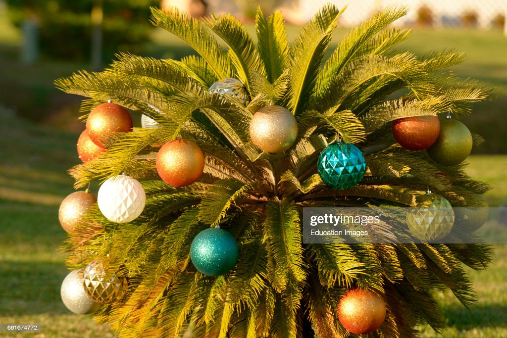 Christmas Ornaments Decorate A Palm Tree In Rotunda West Florida News Photo Getty Images