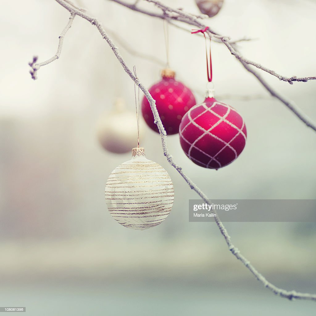 Christmas Ornaments in Tree : Stock Photo