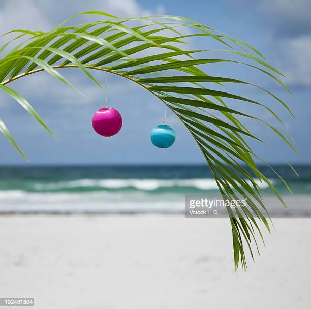 Christmas ornaments on a palm tree